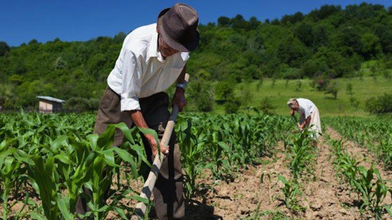 fondi europei agricoltura biologica