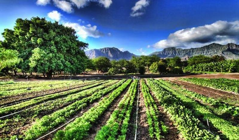 Fondi europei aziende agricole.